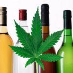 Will Popular Marijuana Strains Become Like Fine Wines?