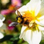 Canada's Environmental Agency Boldly Bans Dangerous But Popular Pesticide