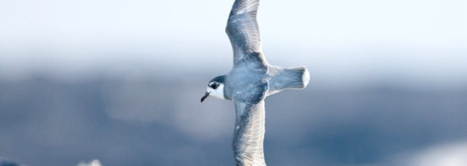 What Happens to Seabirds When They Tragically Mistake Our Ocean Plastic for Food