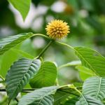 Does Kratom Interact With Any Medications?