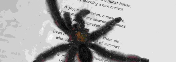 5 Things I Learned From a Poetry Loving Spider
