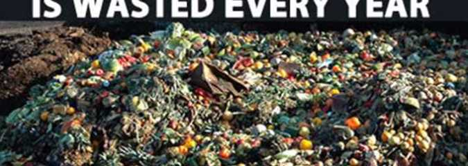 1.3 Billion Tons of Food Wasted Every Year – Here's Why and What We Can Do About It
