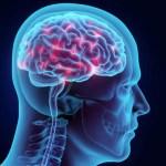 Curcumin Supplementation May Impart Long-Term Cognitive Benefits