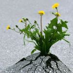 How to Hardwire Resilience into Your Brain