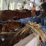 Seeking Spiritual Evolution? Just Gaze At Cows!