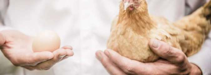 Quantum Weirdness in 'Chicken or Egg Paradox' – Problem Solved by Quantum Physics