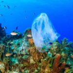 Single-use Plastics Ban Approved by European Parliament