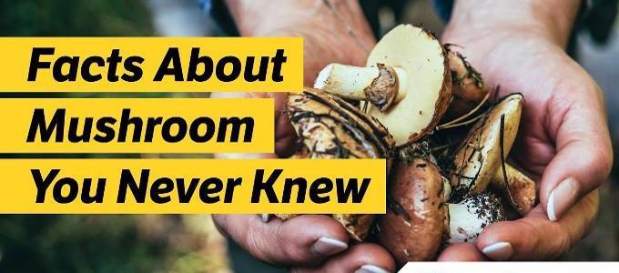Can Mushrooms Help Prevent Cognitive Decline?