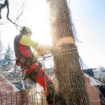Tips To Find The Best Tree Service Company in Calgary