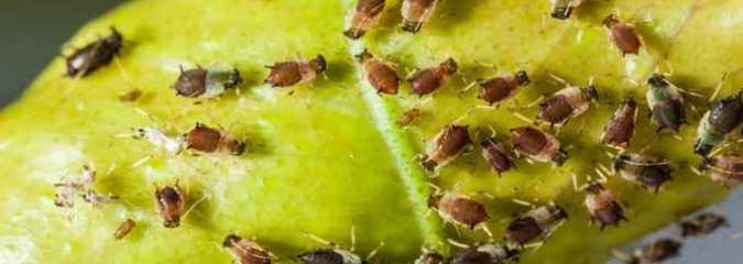Keep Pests Away This Summer (Organically)
