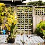 Tips for Creating a Beautiful Garden