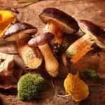 Can Mushrooms Reduce Prostate Cancer Risk?