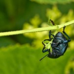 Save the Insects, Save Ourselves: Researchers Sound Alarm on Bugpocalypse