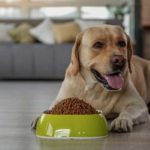 Haven't Changed Your Dog's Diet in a While? She Might Be Missing Key Nutrients