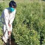 Pakistan Hired 63,000 People Unemployed By COVID-19 to Help Plant 10 billion Trees