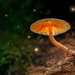 Oregon to Vote on Legalizing Psychedelic Mushrooms, Creating 'Psilocybin Therapy' System