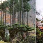 Japan's Ancient Forestry Technique Produces High-Grade Lumber With No Need to Chop Down Trees
