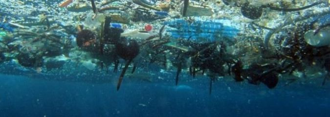 Activists Demand Bolder Efforts to Address Pollution After Scientists Find Microplastics in Human Organs