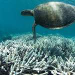 New Study Shows 50% Coral Decline on Great Barrier Reef