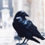 Surprising New Study Shows Crows Experience Complex Subjective Experiences and Consciousness