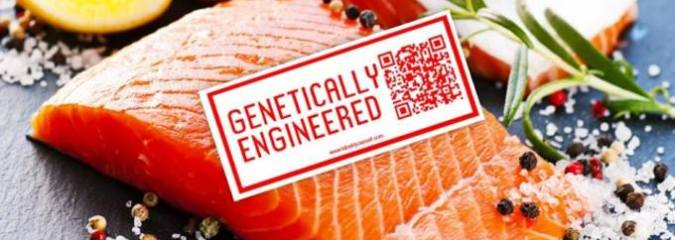 Largest US Retailers Reject GMO Salmon as Court Pressure Builds