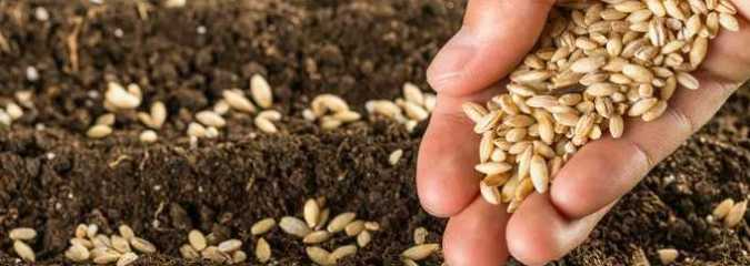 Pandemic Sparks Call for End to Big Ag's Control of Seeds and Food System