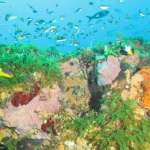 Sanctuary Containing 'Healthiest Coral Reefs in the World' Just Tripled in Size Thanks to U.S. Government Protection