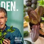 Elon Musk's Brother Starts 'Million Garden Movement' to Plant a Garden For Every Household Living in a Food Desert