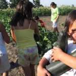 Gardening Advice from Indigenous Food Growers