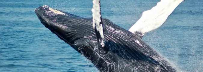 Blue Whales Return to Spain's Coast After Disappearing for 40 Years