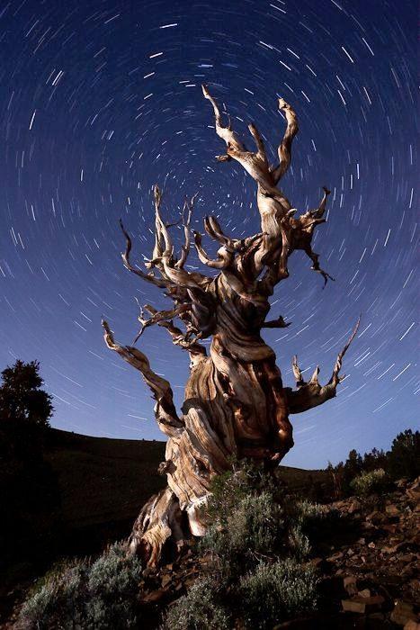 Conscious Trees