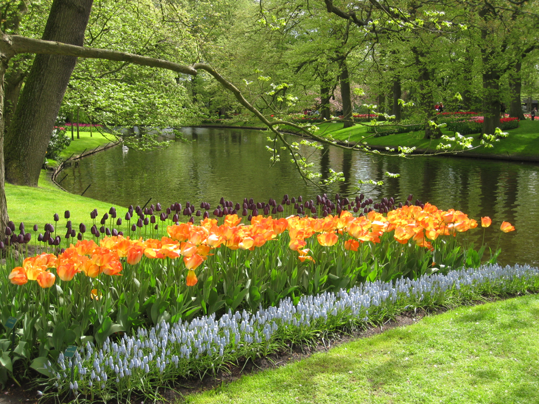 Tulips Ponds Worksheet
