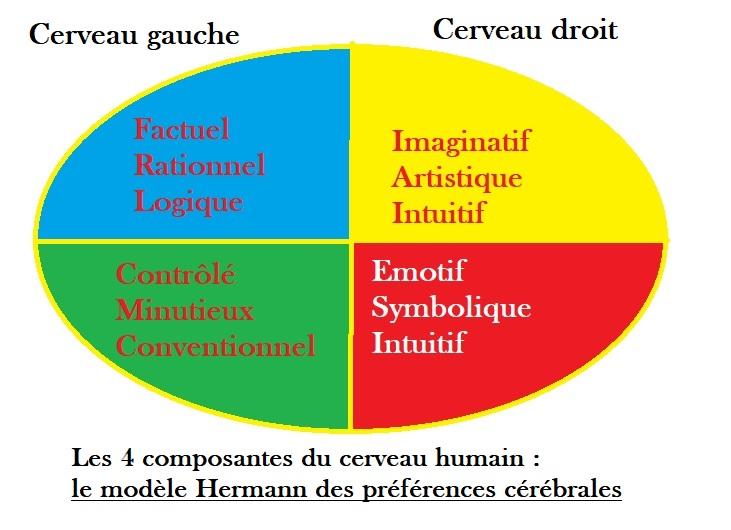 Pitch réussi veut dire respecter ce schéma des préférences cérébrales du psychologue Ned Hermann