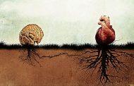CIENTÍFICOS REVELAN QUE EL CORAZÓN HUMANO POSEE UNA
