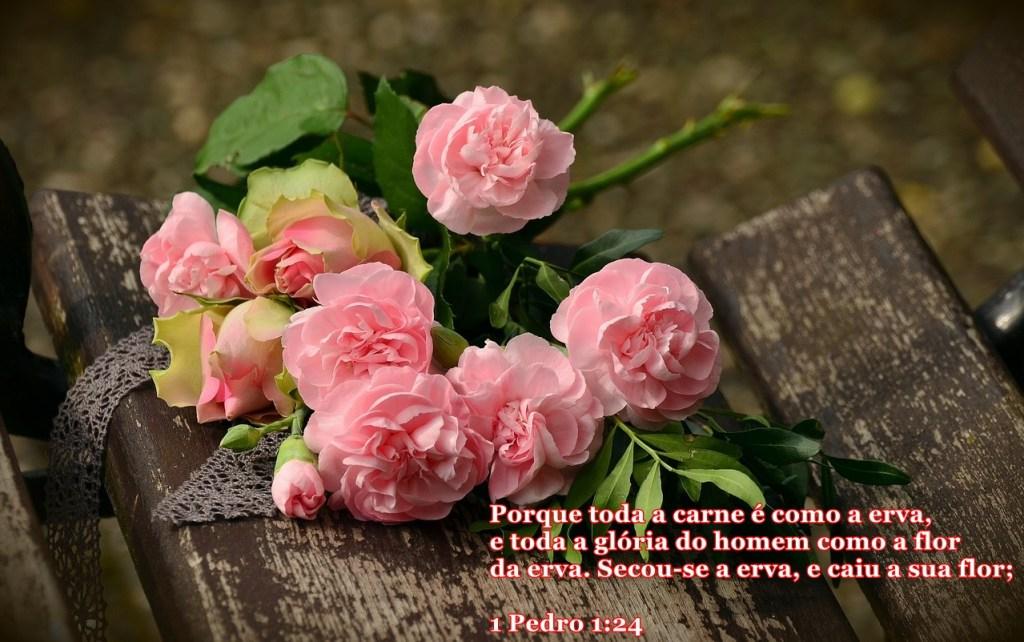 Buque de Rosas - Conselheiro Cristão
