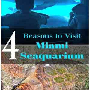 4 Reasons to Visit Miami Seaquarium
