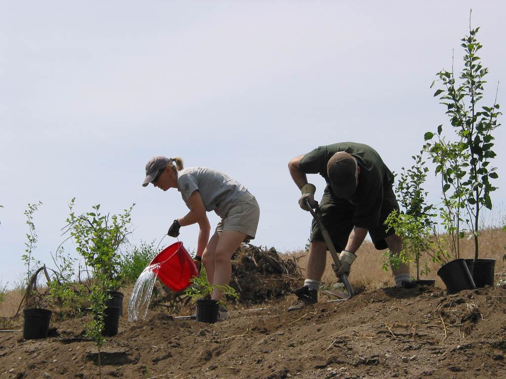 Planting native plants in the Okanagan