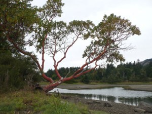 Ayum-Creek-P1040902-400x300-Torrey-Archer