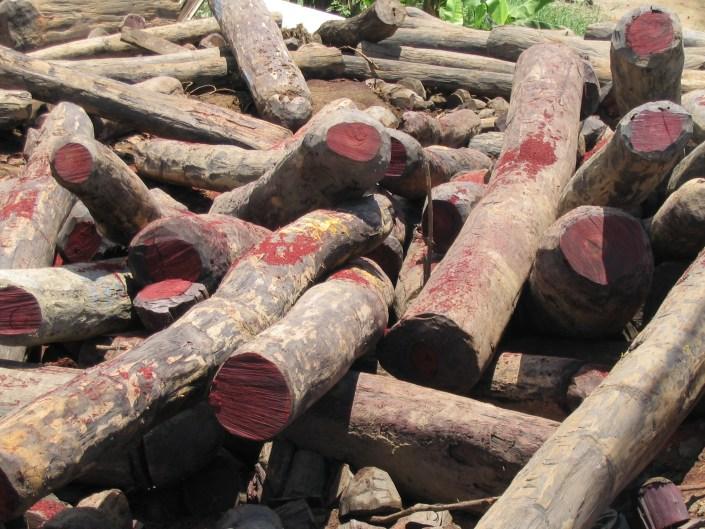 Disorganized pile of cut rosewood