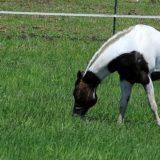 800x400 horse in pasture