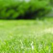 Adobe Stock grass lawn