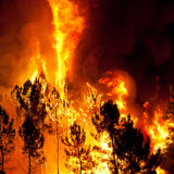 Forest Burns close to houses