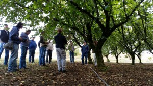 Board views conversion to drip irrigation in hazelnut orchard