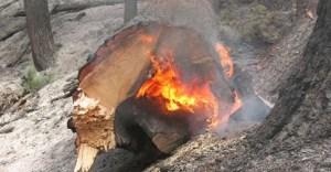 Prolonged burning kills soil organisms (Oregon Dept. of Forestry)
