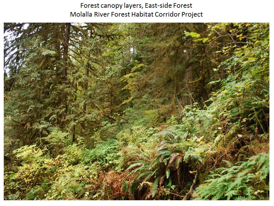 Canopy layers riparian Eastside & Canopy layers riparian Eastside - Clackamas SWCD