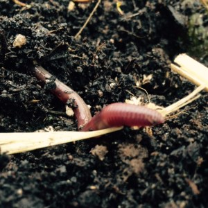 Healthy soil holds more water to support microbes and invertebrates.