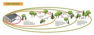 Space trees farther apart in the Intermediate Zone. (NFPA.org)
