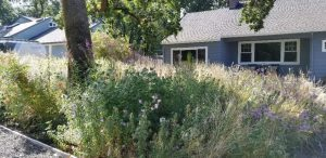 This backyard habitat features a diversity of native plants.