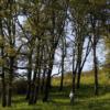 Oak Woodland credit Roberta Schwarz 800x400