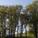 Roberta Schwarz oak woodland 800x400